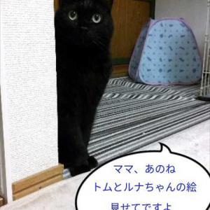 トム(ΦωΦ)ルナちゃん(*・ω・)