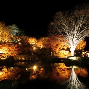 2019/11/16(土) 桜山公園ライトアップ 群馬県