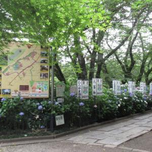 2021/6/12(土) 保和苑あじさいまつり 茨城県