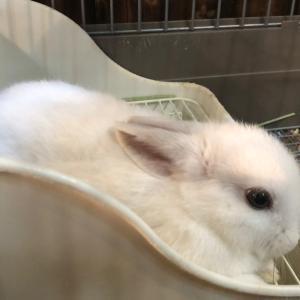 ウサギにデグーにチクチクにモルモット