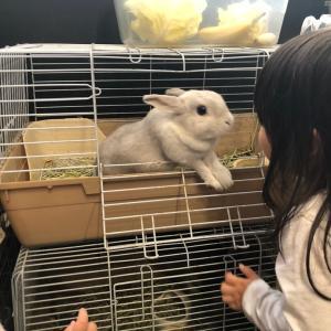 白ウサギがモテるのは何でだろ