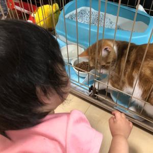 愛猫と愛娘