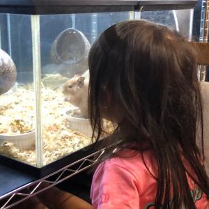 ネズミとウサギと遊ぶ娘