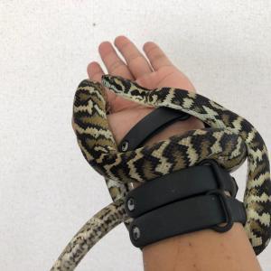 爬虫類たちをお店に輸送しました