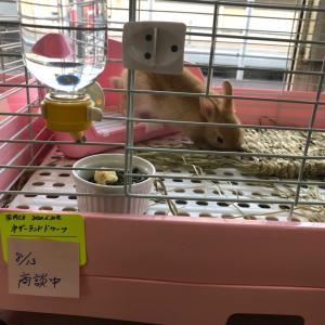 当店の隠れた小動物