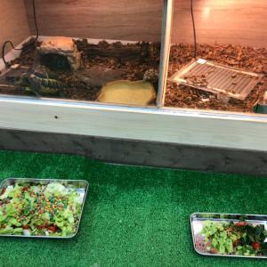 草食性爬虫類のご飯タイム