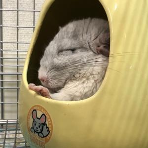 眠るモフ獣と草食う要塞