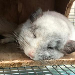 眠る毛玉動物たち