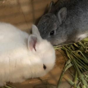 久しぶりの子ウサギちゃん