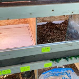 爬虫類ケージの大掃除と本日の入荷品