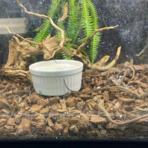 店内のカナヘビの快適?生活