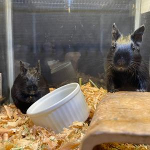 自宅の歌うネズミたち♪