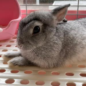 眉毛が生えた?子ウサギさん