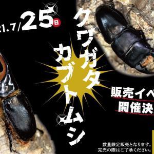 7/25(日)は当店クワガタ即売会イベント