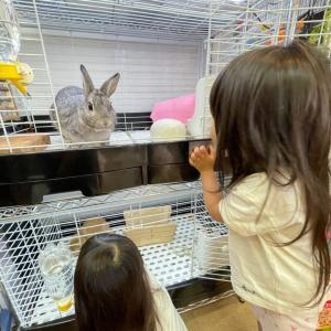 娘2人の可愛がりウサギ