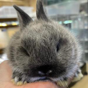 子ウサギさんが自宅にやってきました