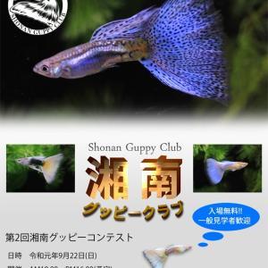 湘南グッピークラブからお知らせです
