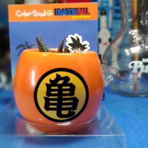 亀仙人の植木鉢とハオルチアドラゴンボール