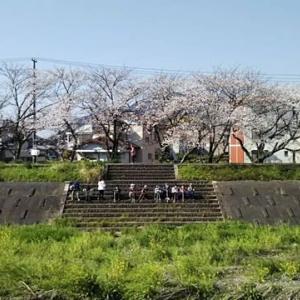 やっとソメイヨシノが咲き始めました