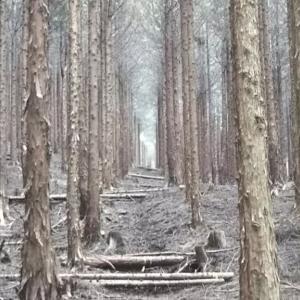 森林浴の明暗