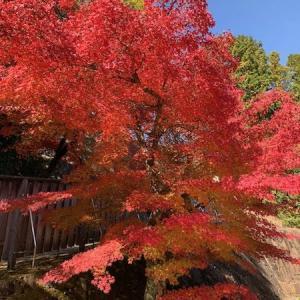 華やかな晩秋、色鮮やかな虎渓山