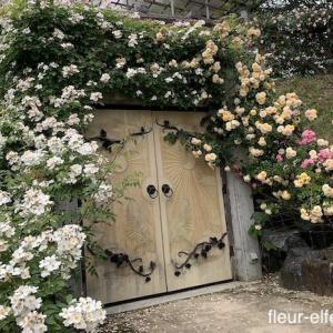 薔薇に包まれた太陽と月の扉【第五章】