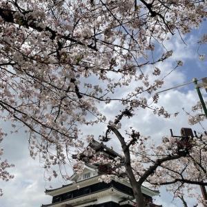 桜咲く清洲城を登城