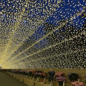 なばなの里イルミネーション『光のトンネルに花が咲く』