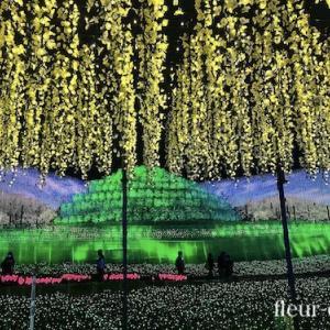 音と光の幻想的夜「奇跡の大樹」inなばなの里