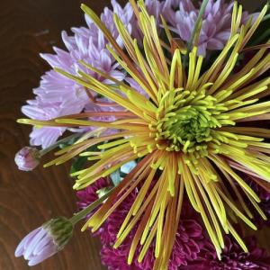 菊の花を生けて祈る重陽の節句