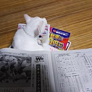 新聞を愛する猫対策