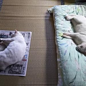 2匹ともベッド派です。