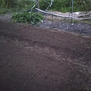 朝の農作業