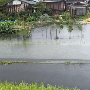 スイカ畑はため池に