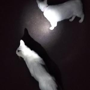 夜の散歩は