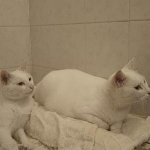 混浴の季節