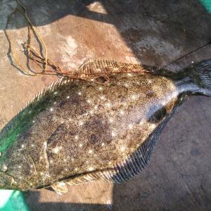 豊浜 アジからのカワハギ釣り