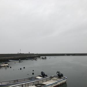 今日も大野漁港