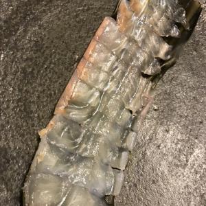 武豊で買ったヒラメ