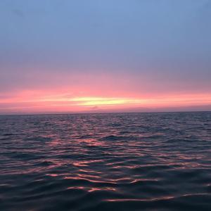 知多半島 メバル 夜釣り