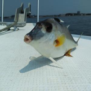 知多半島でタコ釣りに