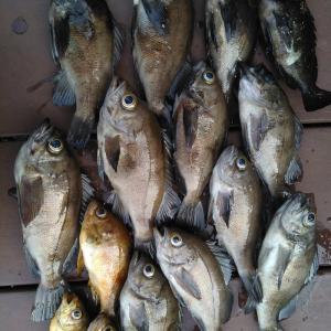 知多半島 メバル夜釣り