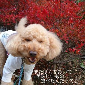秋の景色に美味しいランチ