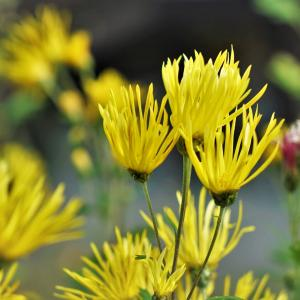 風邪消えたか、冬の花。