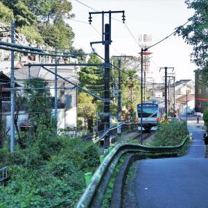 篭彫り松に鶴、住吉神社。青梅宿。
