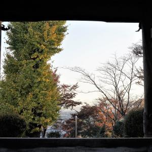町田市、長福寺の文珠堂。冬のお家を温かくしてチュウリップ
