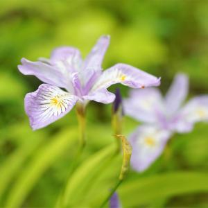 花の声を聞き、一枝の花に野坂寺 ①。秩父。