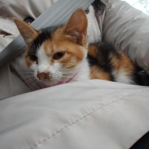 子猫マリーヒェンが…!?猫の発情の特徴