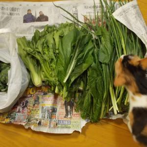 宮古島のオーガニック野菜