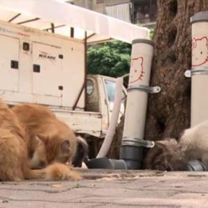 シリアのノラ猫、水道管でごはんをもらう
